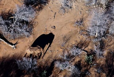 Protecting Kenya's elephants with drones