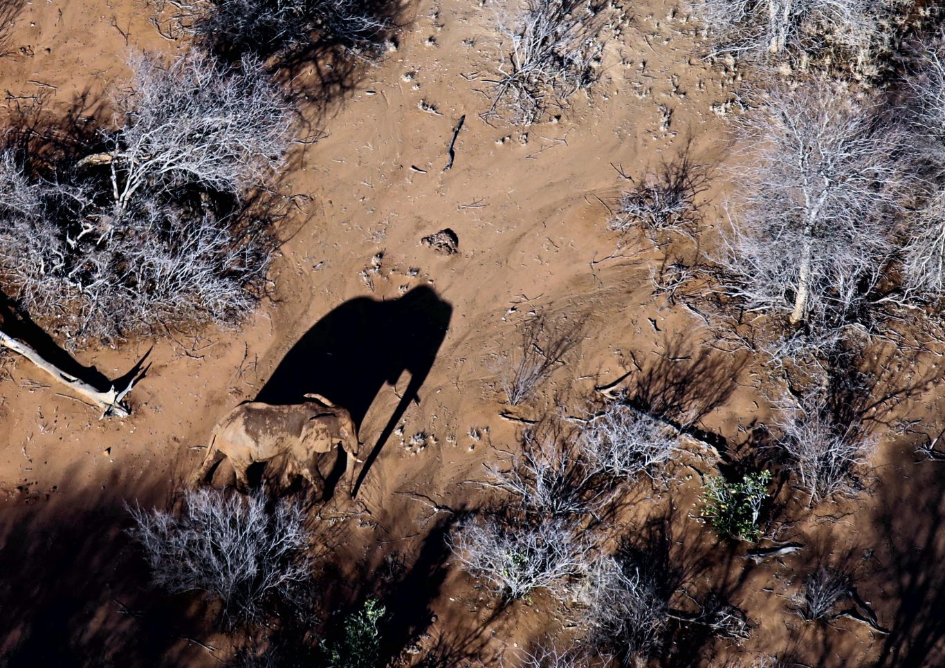Protecting Kenya's elephants with drones